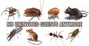 types of uninvited pests